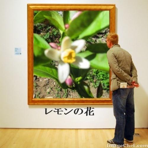 5/17 レモン.jpg