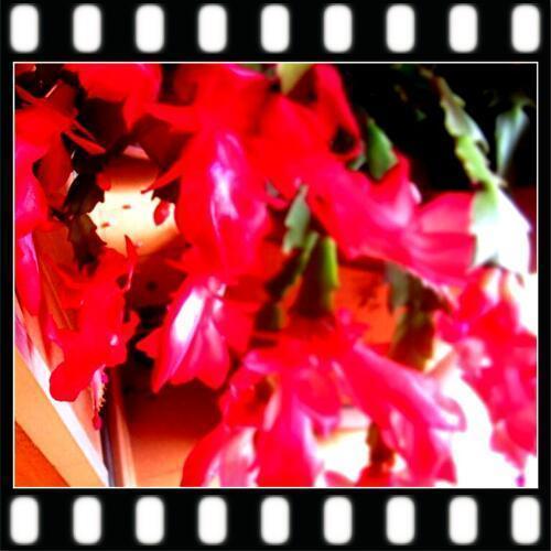 11/2 花 .jpg