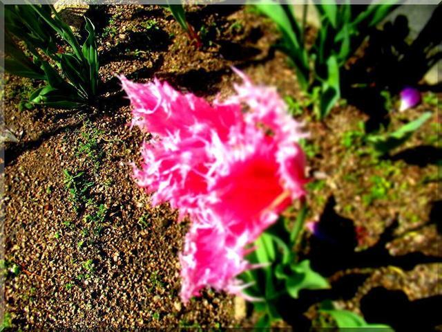 4/14 花.jpg