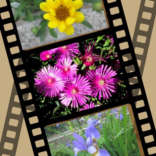 5/20 花.png