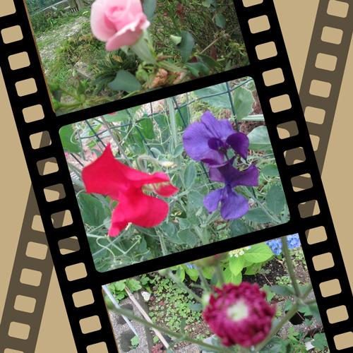 5/30 花.png