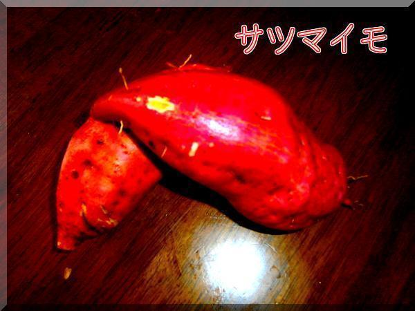 8/30 サツマイモ.jpg